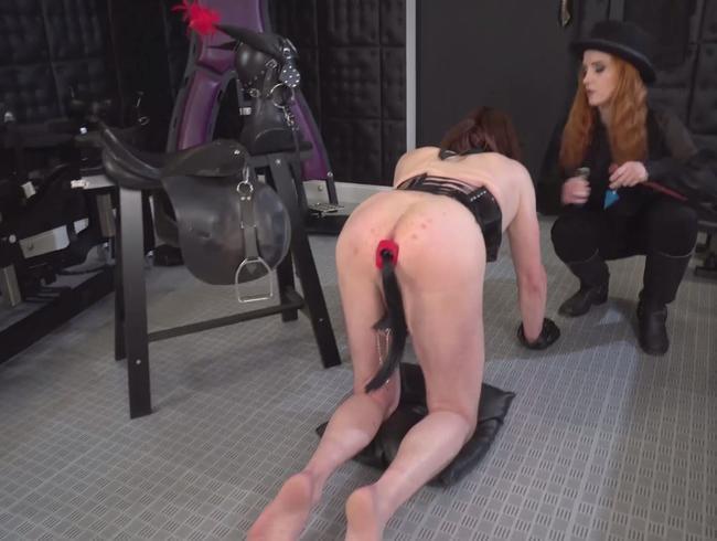 Video Thumbnail Ein neues Pferdchen für die Herrin